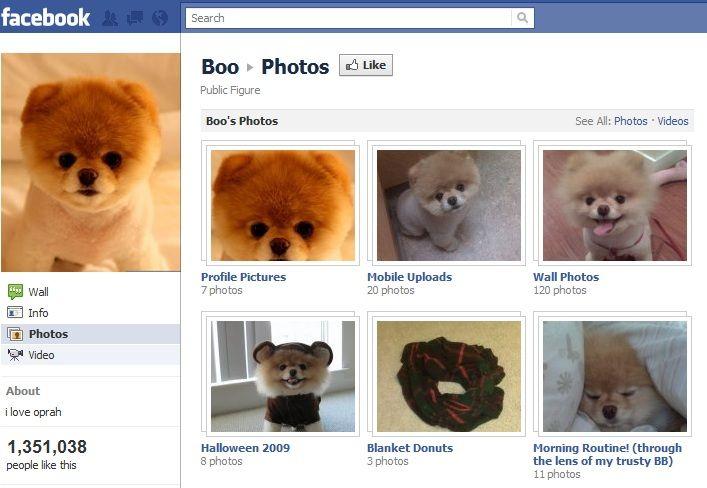 página de facebook de mascota