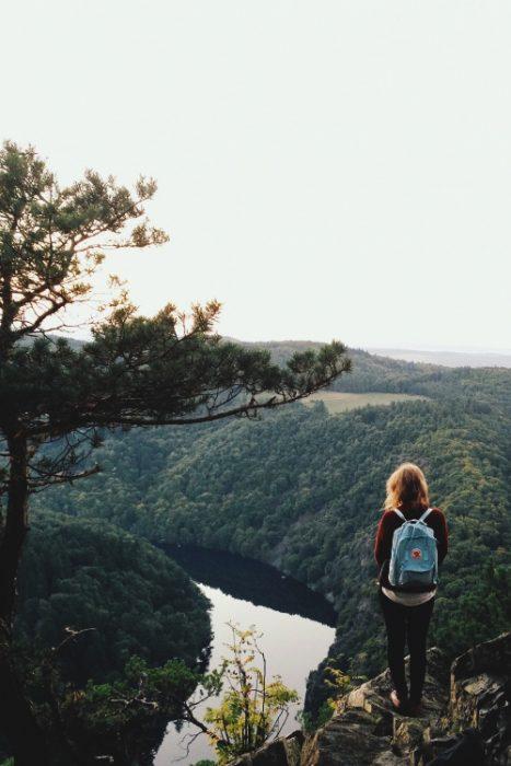 Chia parada sobre una roca observando el bosque