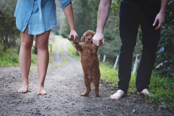 Pareja de novios sosteniendo de las patas a un cachorro café