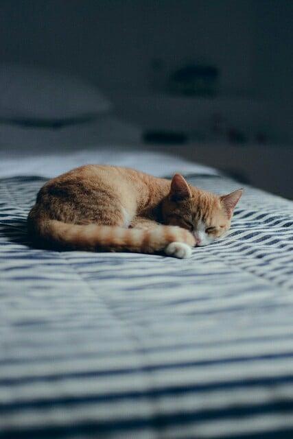 Gato dormido en la cama