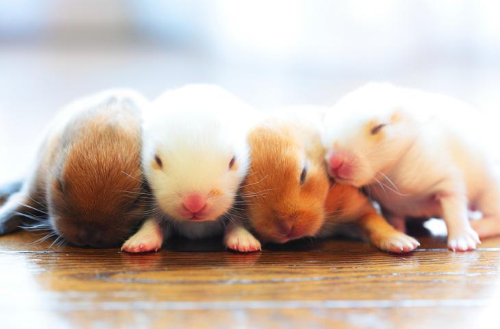 roedores bebé durmiendo