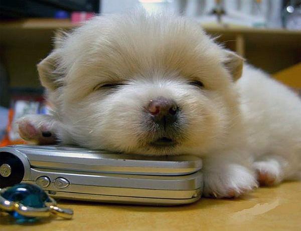 perrito dormido en escritorio