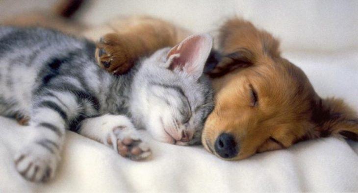 cachorro y gatito duermen juntos