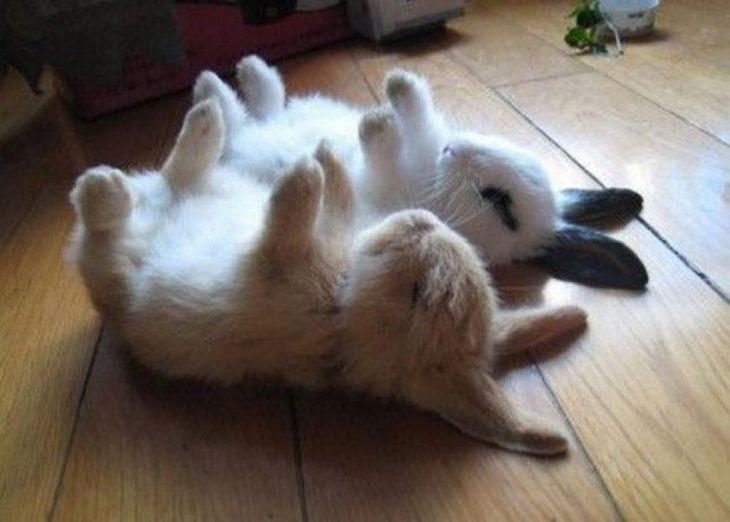 conejitos durmiendo