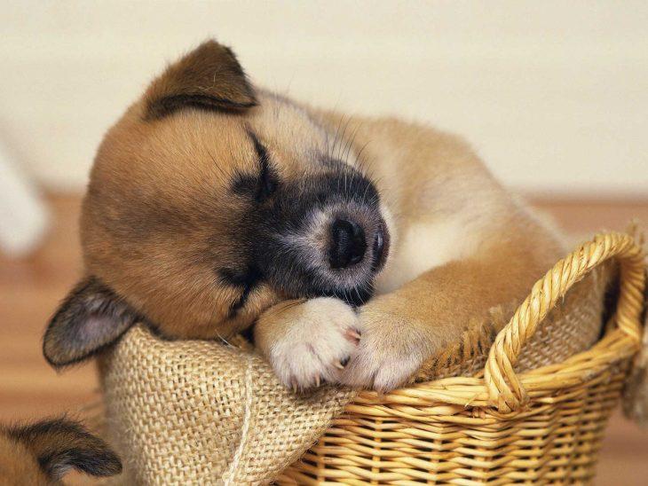 cachorro durmiendo en una canasta