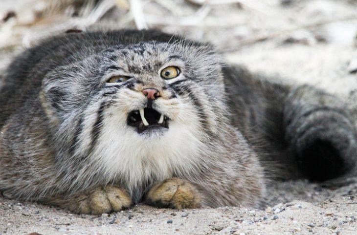 25 animalitos que fallaron a la hora de verse rudos
