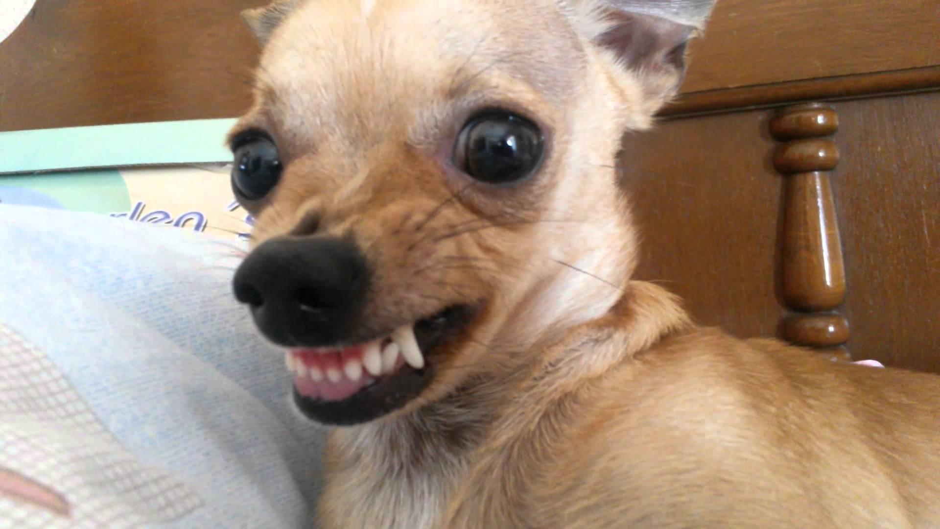 Idea Pictures 25 Adorables Animales Que Fallaron A La Hora De Verse Rudos