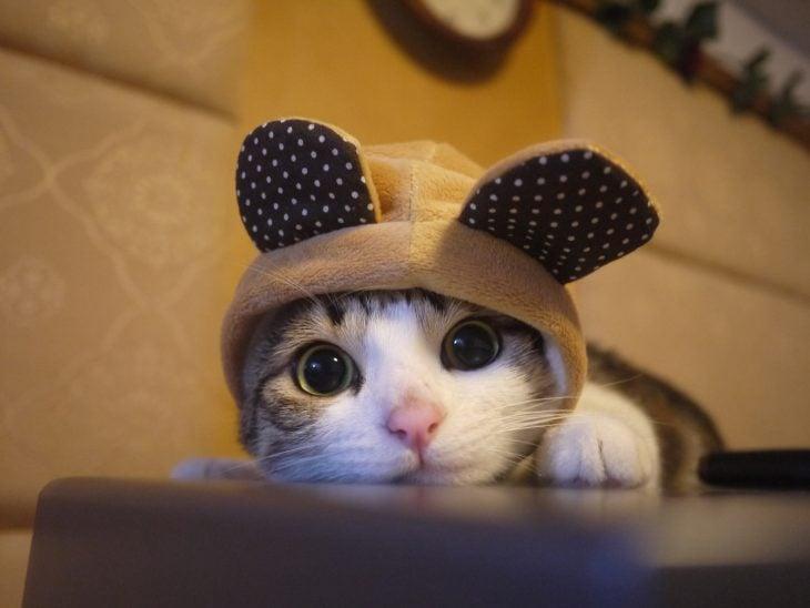 Gatito usando unas orejas de conejo