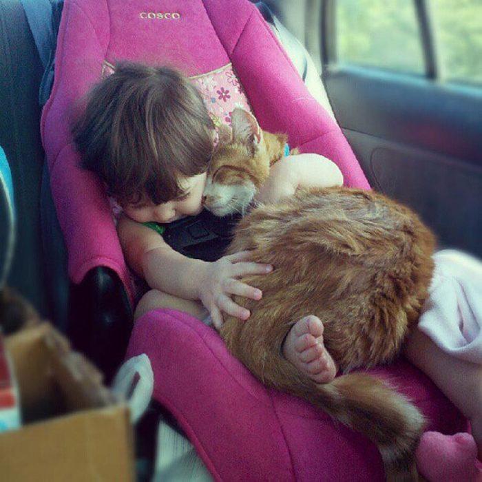 bebé con gato en asiento de bebé