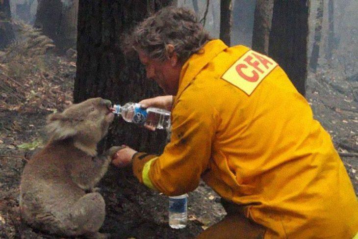 bombero da agua a un koala durante incendio