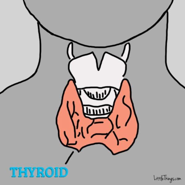 gráfico de glándula tiroides