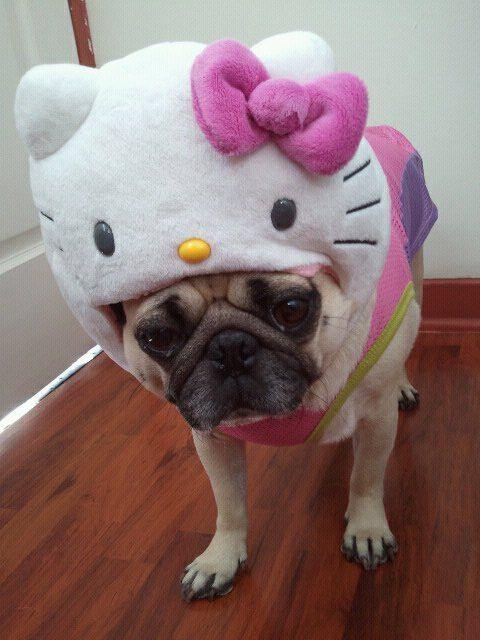 Perro pug con sombrero de Hello Kitty