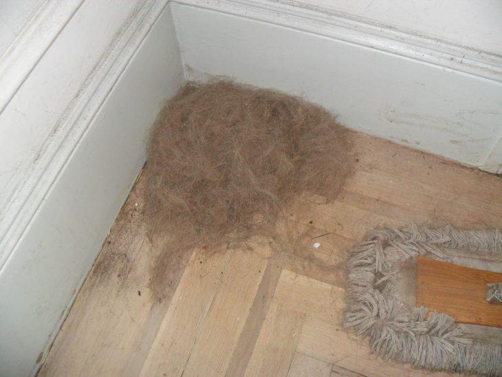 pelo en el suelo