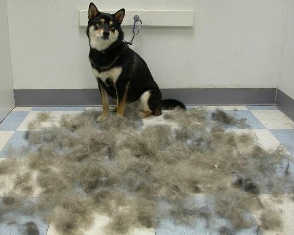 perro con pelos