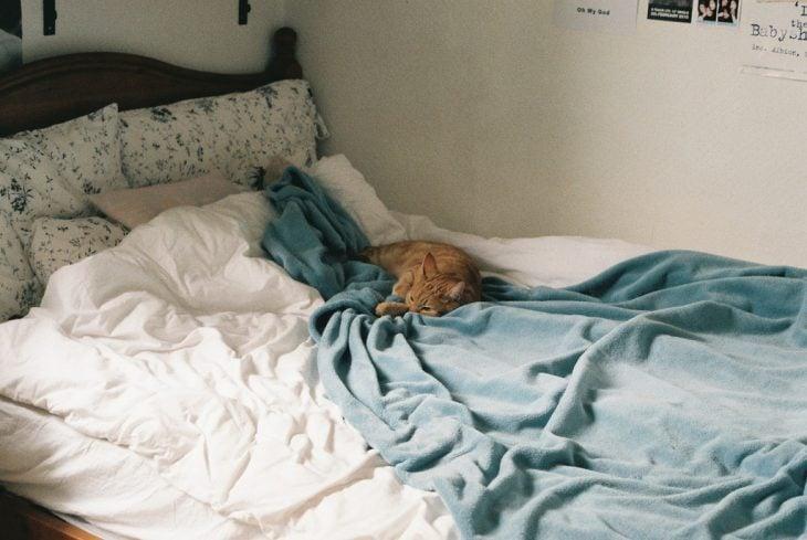cama sin tender