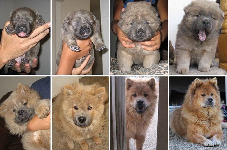 Perro antes y después de crecer en su evolución desde hace 10 años