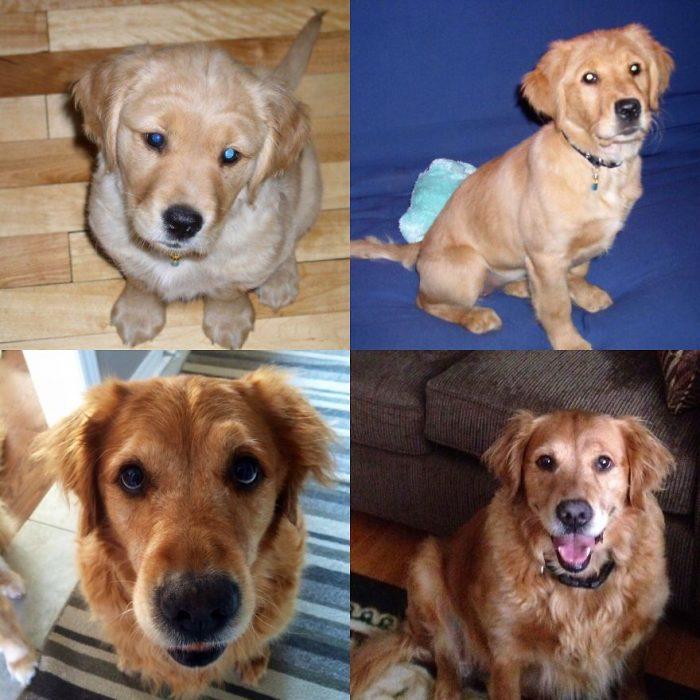 Perro antes y después de crecer su evolución en 10 años
