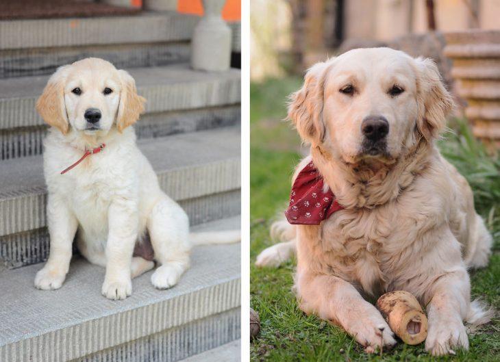 Perro antes y después de crecer sentado en las escaleras de una casa