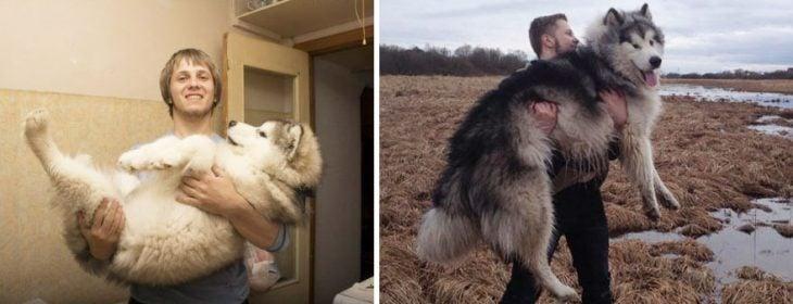 Perro antes y después de crecer junto a su mismo dueño