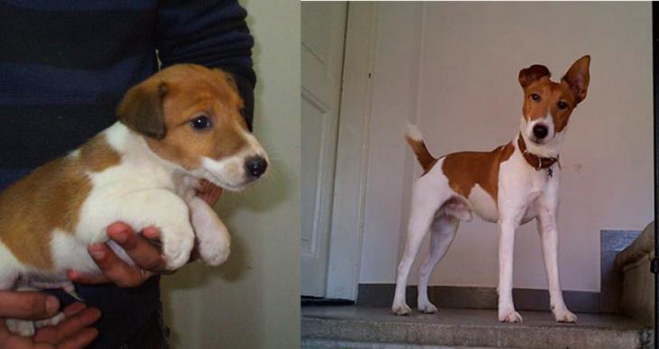 Perro antes y después de crecer