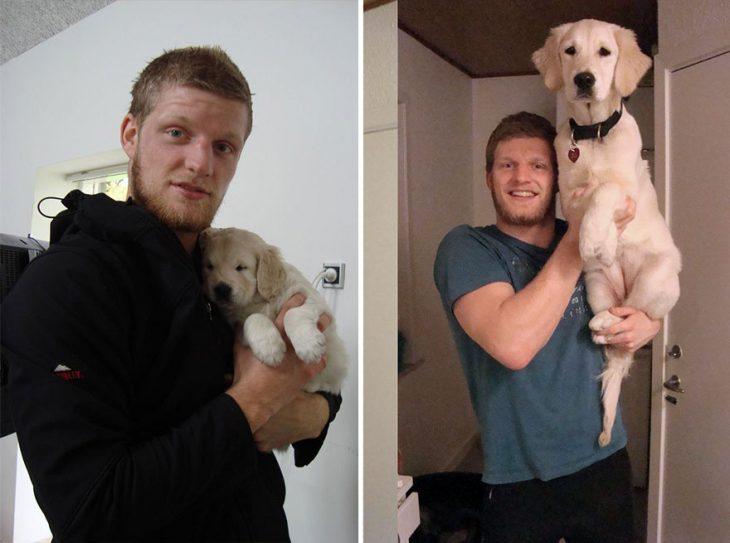 Perro antes y después de crecer siendo sostenido por su dueño