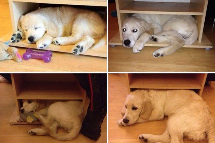 Perro antes y después de crecer metido dentro de una caja