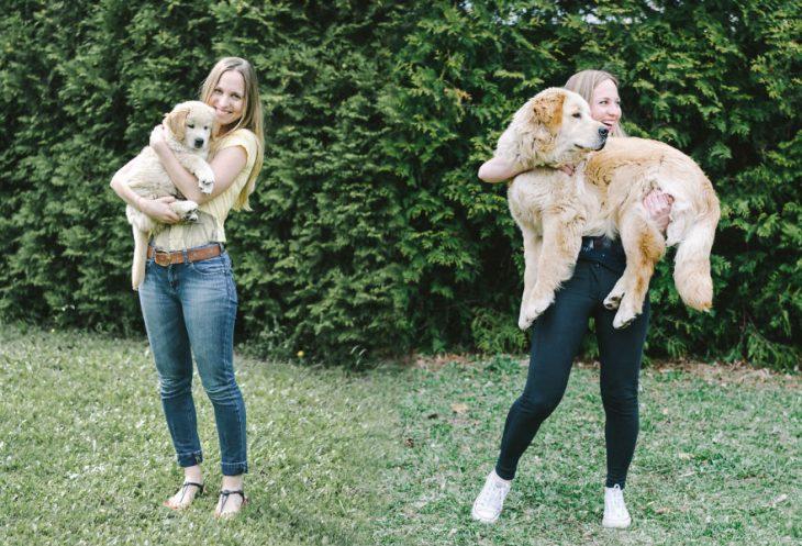 Perro antes y después de crecer siendo cargada por su dueña