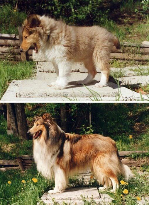 Perro antes y después de crecer parado en el mismo parque
