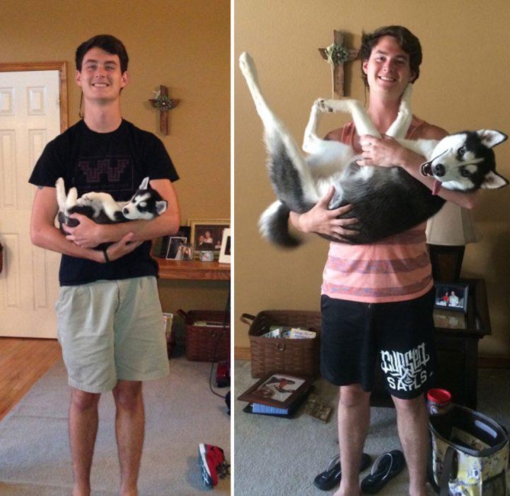 Perro antes y después de crecer siendo cargado por su dueño