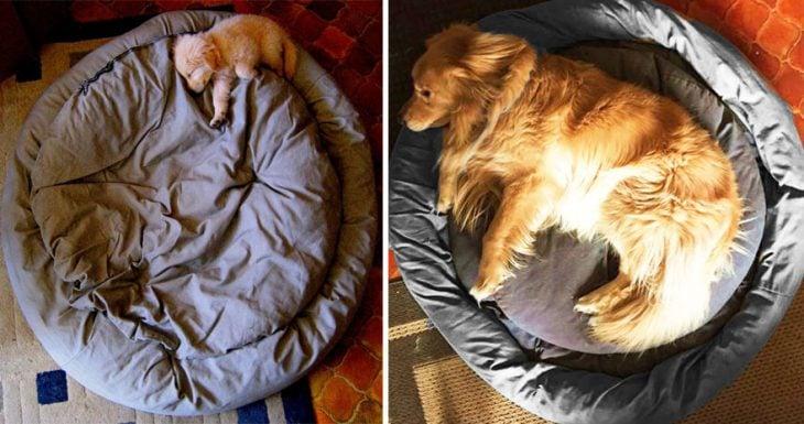 Perro antes y después de crecer recostado en su cama