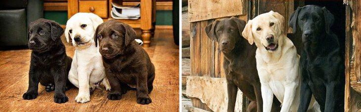 Perro antes y después de crecer parado afuera de su casa