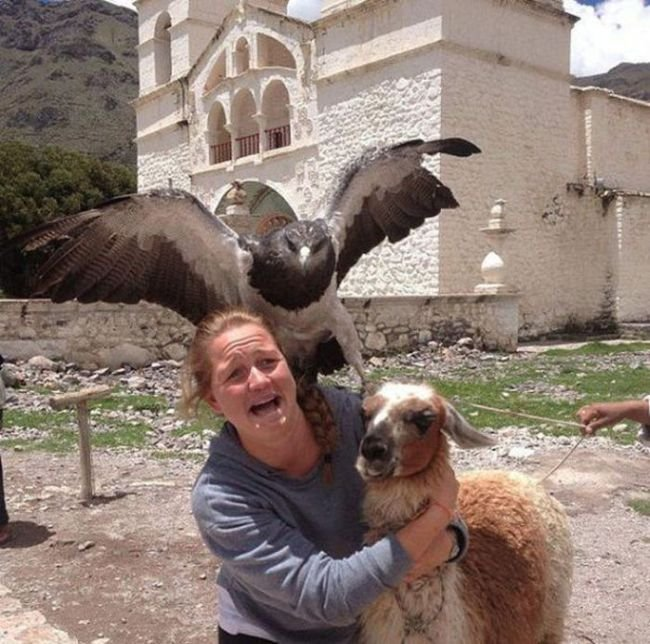 photobomb águila asusta a mujer y oveja