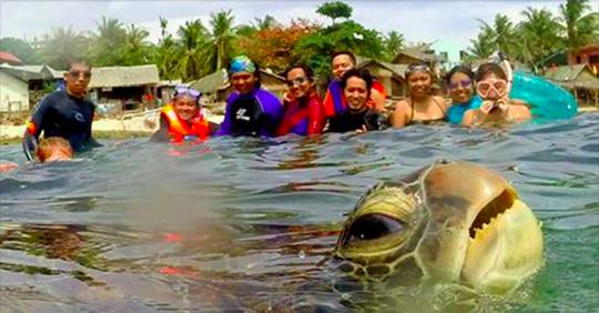 photobomb tortuga pasa frente a turistas en acuario