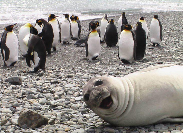 photobomb pingüinos y foca