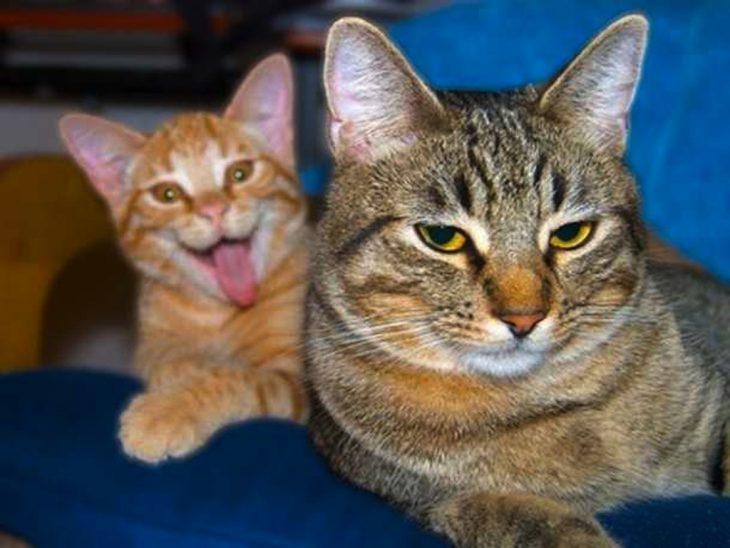 photobomb un gato saca la lengua