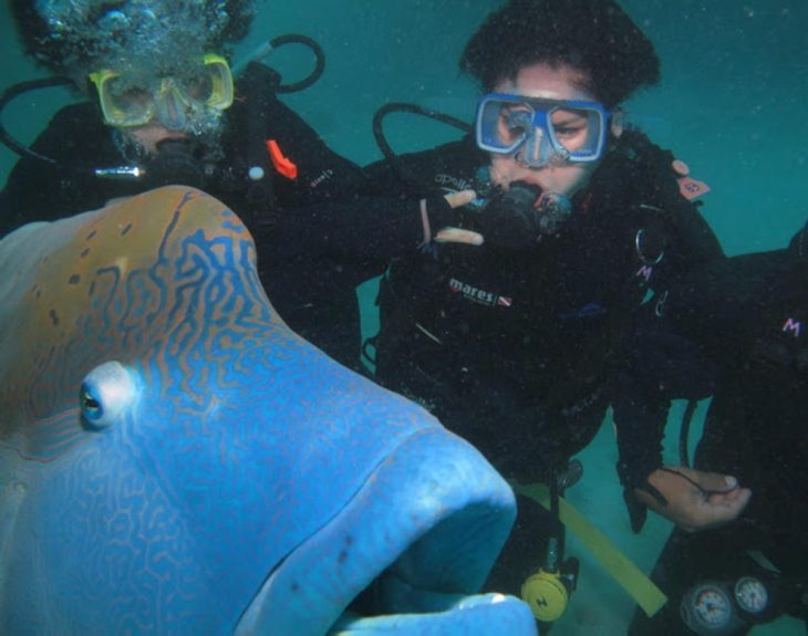 photobomb pez frente foto submarina buzos