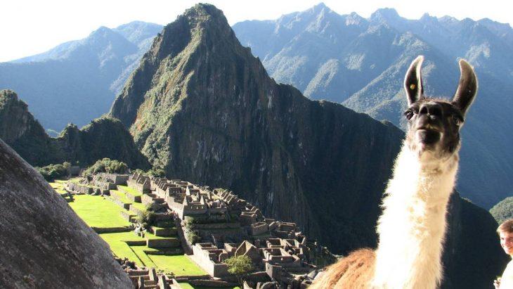 photobomb llama en ruinas incas