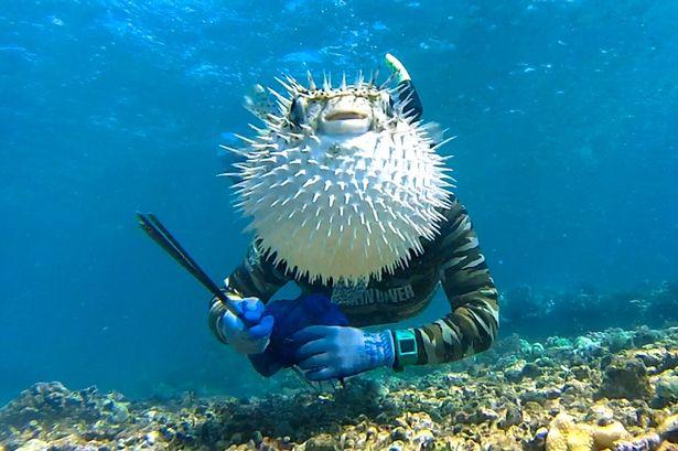 photobomb pez globo con buzo
