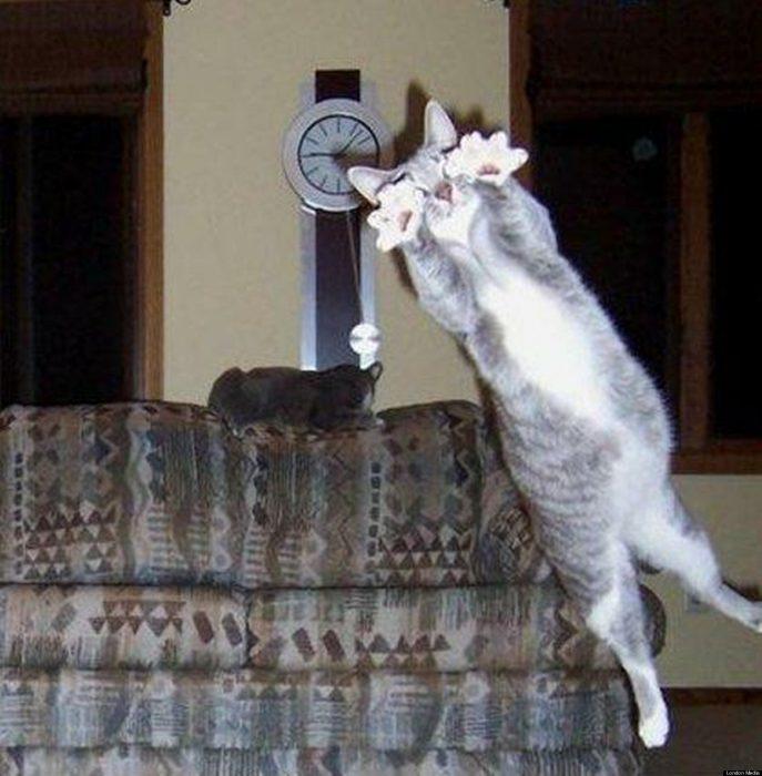 photobomb gato salta frente a la cámara