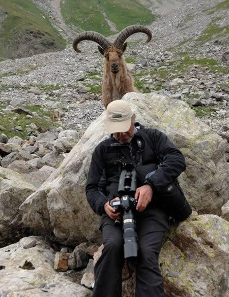 photobomb cabra detrás de fotógrafo