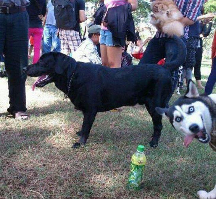 photobomb perro se asoma a foto