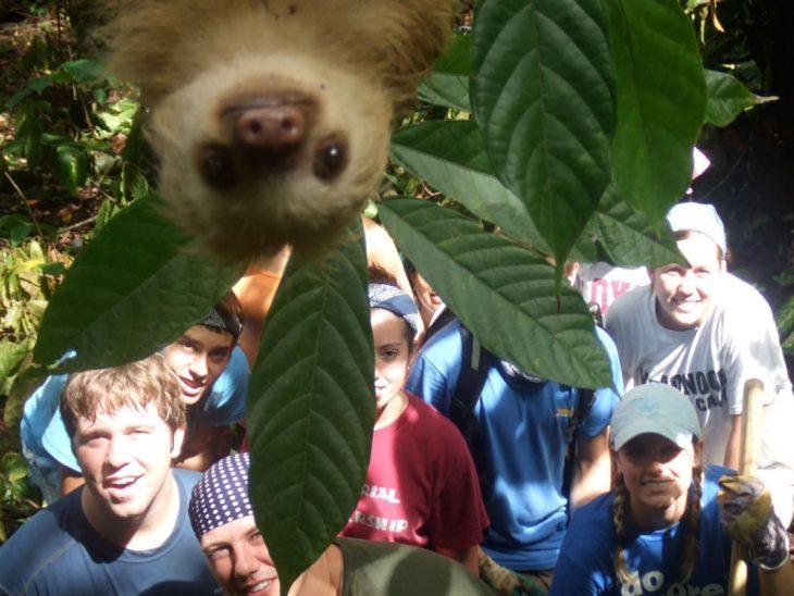 photobomb koala interrumpe foto de turistas