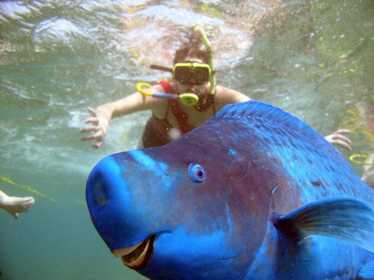 photobomb pez frente a buceador