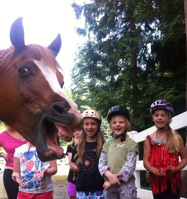 photobomb caballo con niños