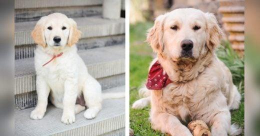 fotos en las que te darás cuenta de los cambios que sufre un cachorro