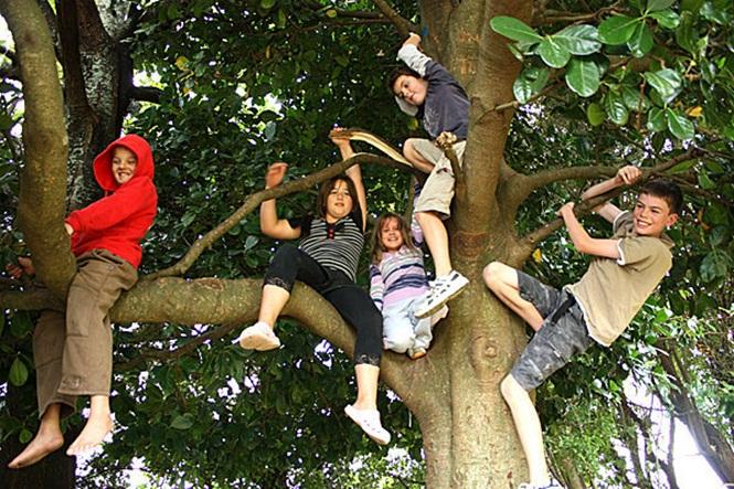 niños arriba de árbol