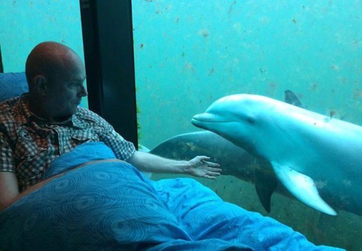 paciente terminal en una camilla jugando con delfines en un acuario