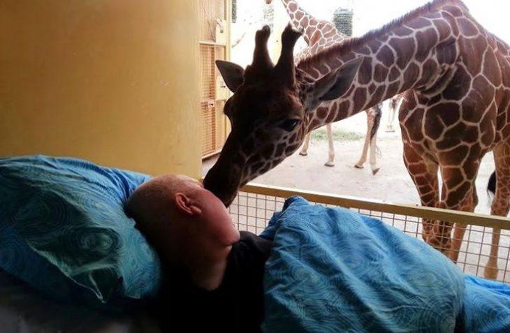 paciente terminal en una camilla besando a una jirafa