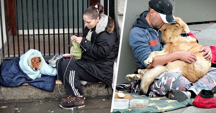 perros que aman a su dueño sin importar clase social