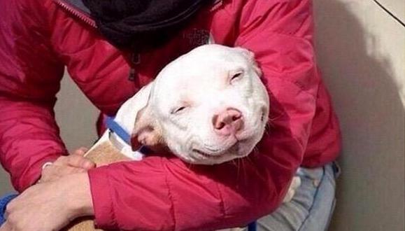 perro siendo acariciado